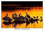Wading Birds in Florida Sunset