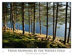 Fresh Morning by the Water's Edge