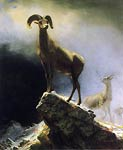 Rocky Mountain Sheep Albert Bierstadt
