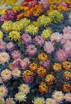 Bed of Chrysanthemums Claude Monet