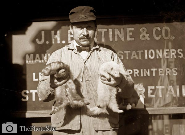 Rat catcher and ferrets - Click Image to Close