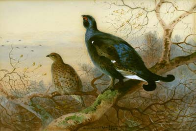 A Blackcock and Grey Hen perched by Archibald Thornburn