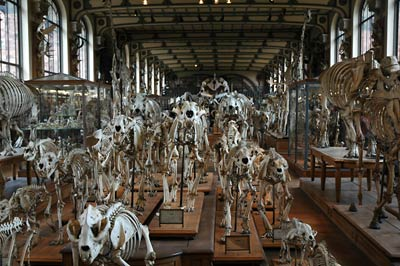 Animal bones ? Paris anatomy natural history museum