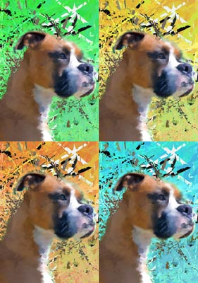 Boxer Dog Pop Art
