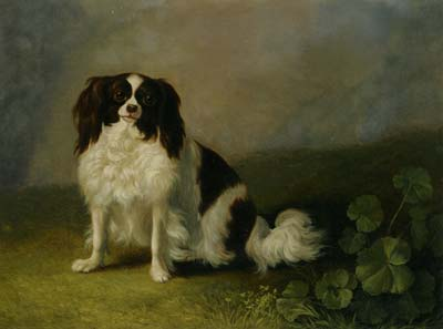 A King Charles Spaniel in a Landscape