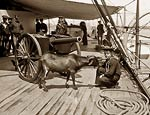 U.S.S. New York warship, Pitch the goat mascot